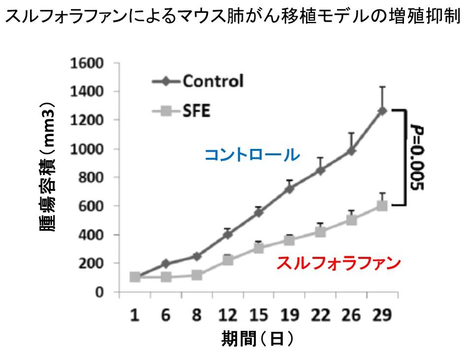 スルフォラファンによる肺がんモデル抑制
