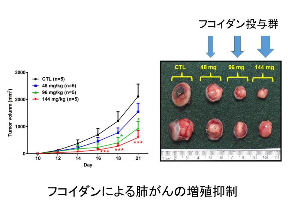 フコイダン肺がんマウス実験