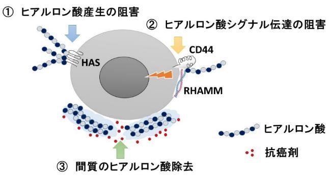 ヒアルロン酸をターゲットとした治療戦略