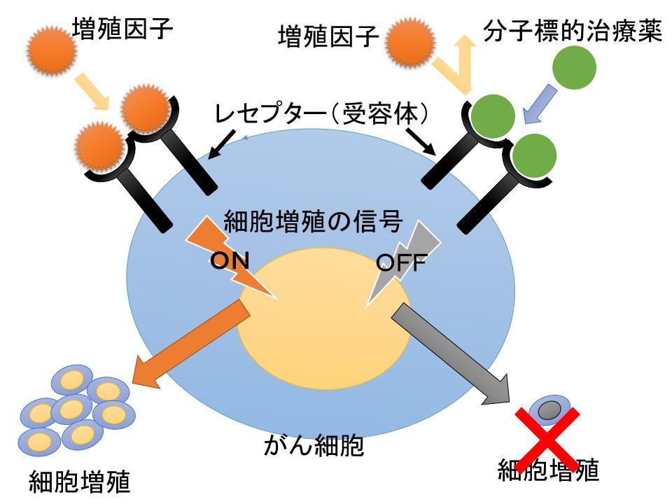 分子標的治療薬メカニズム