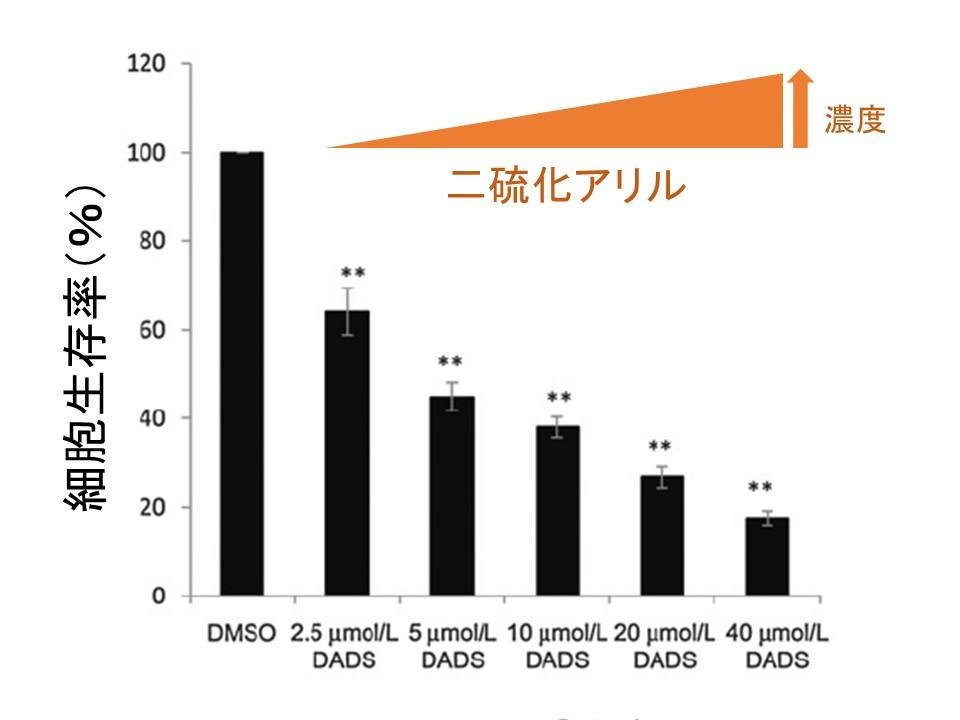 二硫化アリル大腸がん細胞生存率