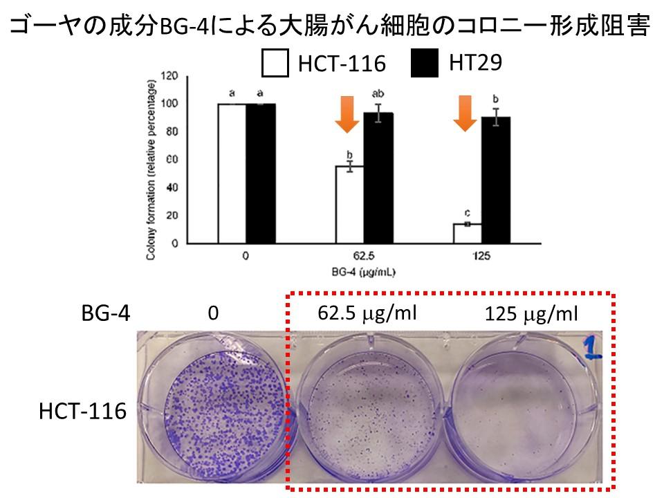 ゴーヤBG-4大腸がん細胞アポトーシス