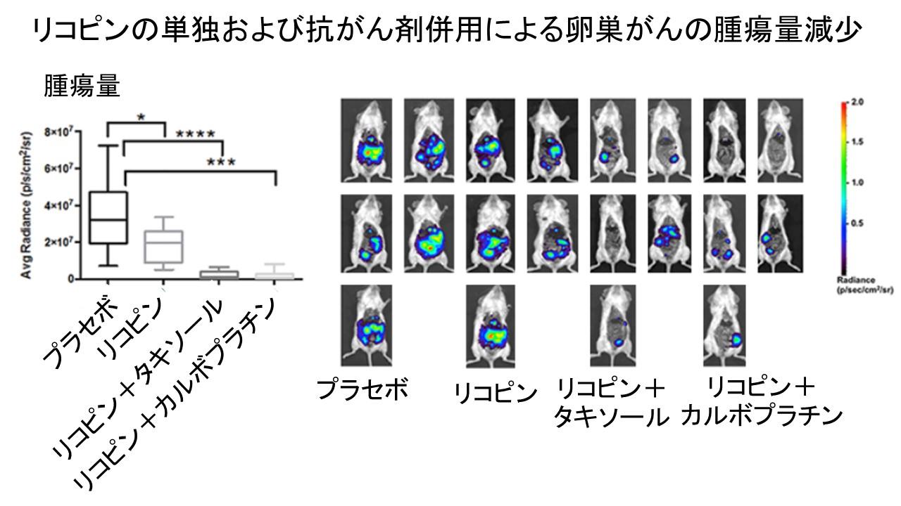 リコピン卵巣癌腫瘍量