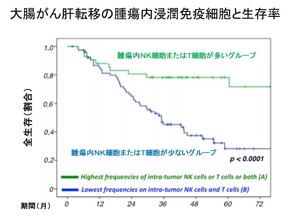 腫瘍内免疫細胞と生存期間