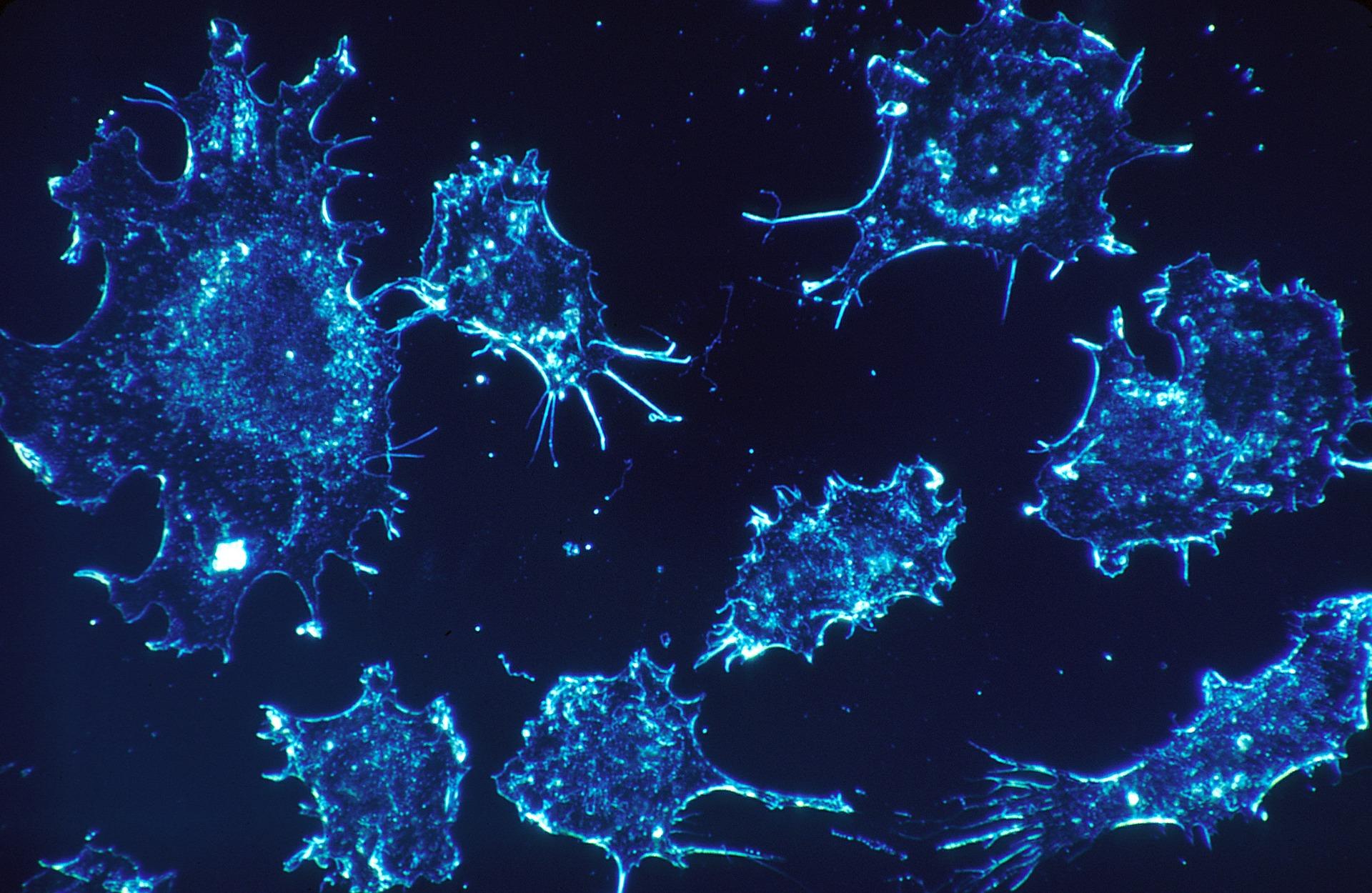 がん幹細胞をターゲットにした抗がんサプリメント5つ:再発・転移を防いで根治を目指す!
