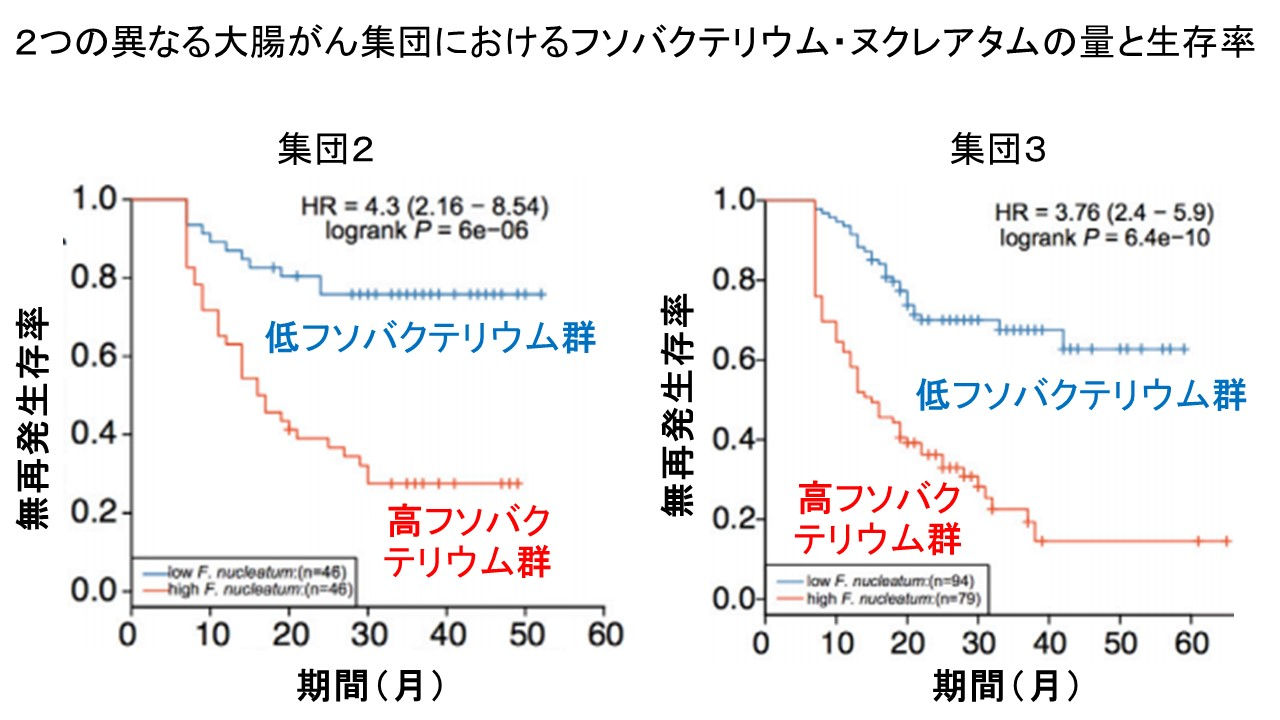 フソバクテリウムの量と大腸がん予後