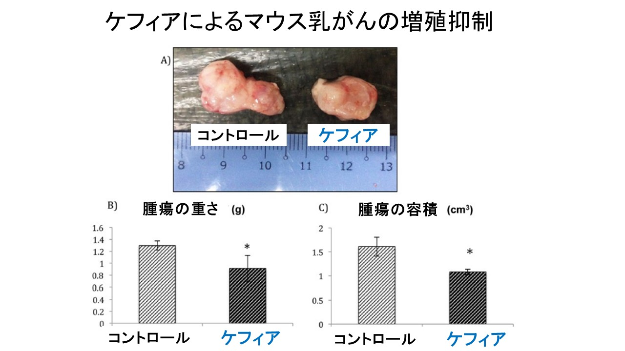 ケフィアによるマウス乳がん抑制