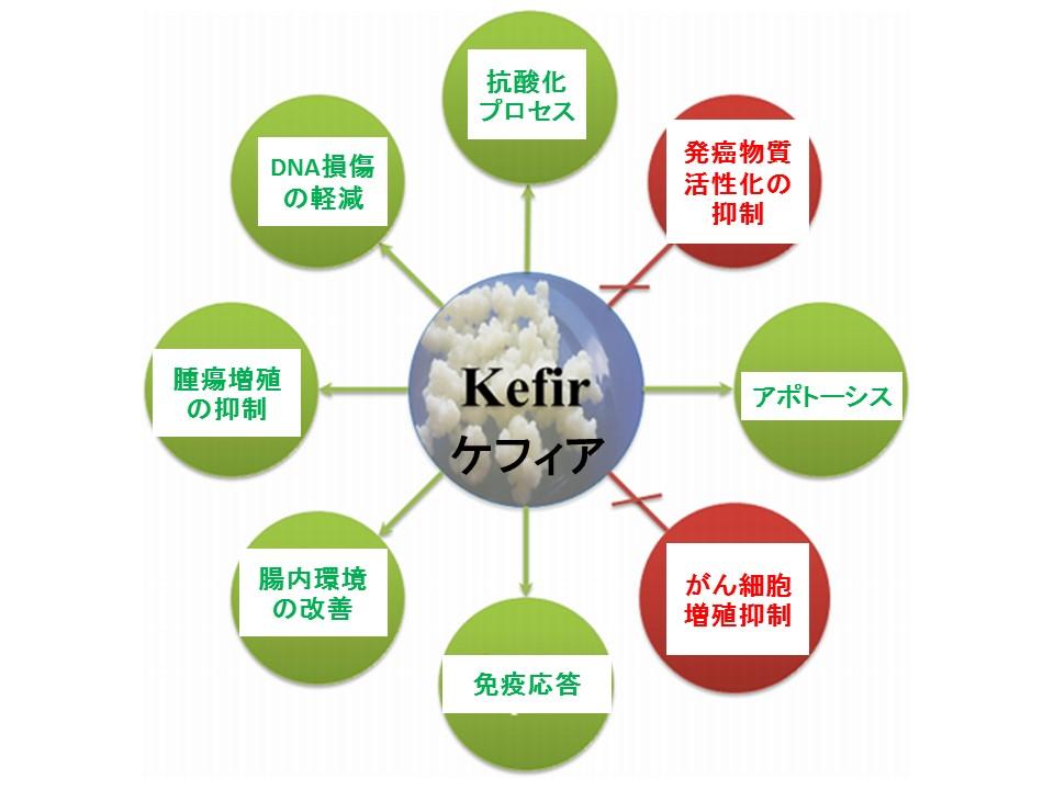 ケフィアの抗がんメカニズム