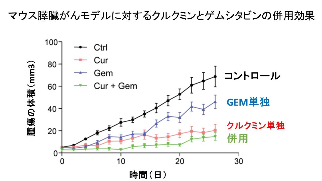 クルクミンとジェムザール併用マウス膵癌