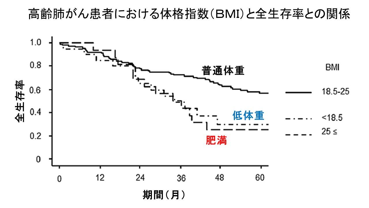 高齢肺がん患者におけるBMIと全生存率