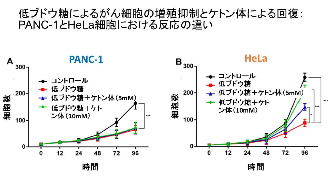 試験管増殖曲線ケトン体分解酵素
