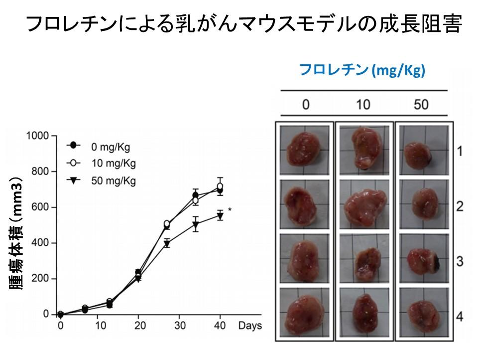 フロレチン乳がんマウスモデル