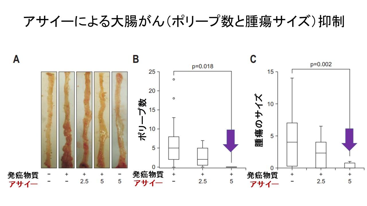アサイーによる大腸化学発癌抑制